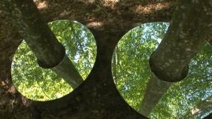 arbres-miroirs